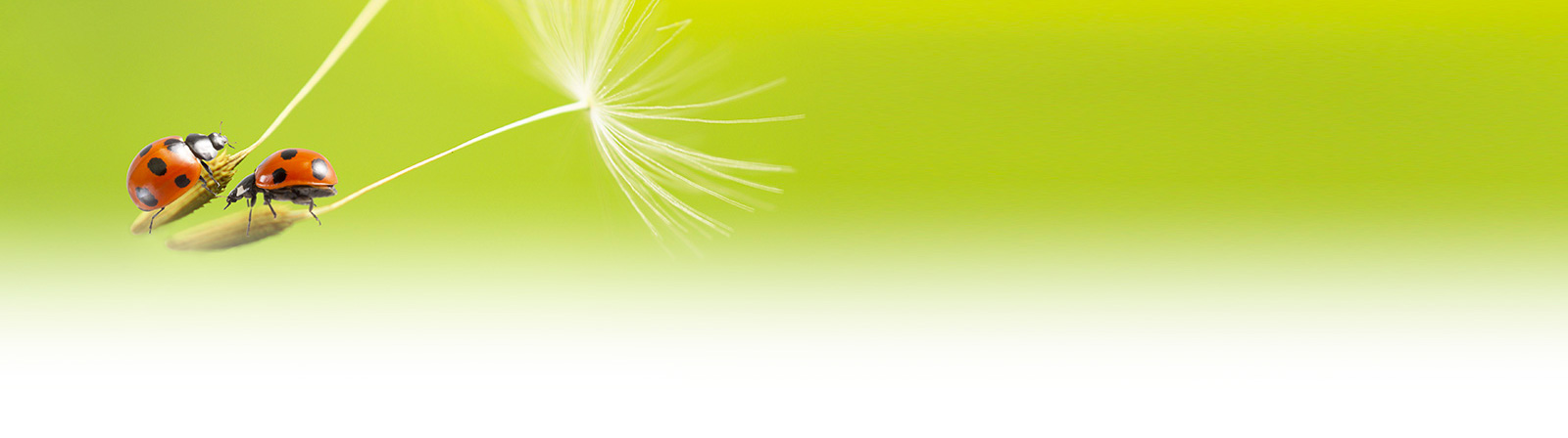 sfondo green emotion