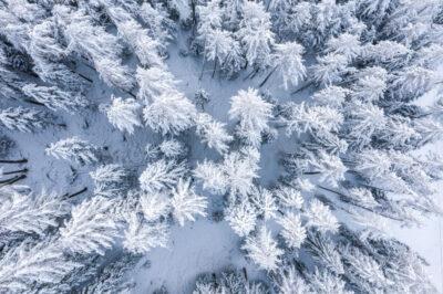 Giornata mondiale della neve: uno spettacolo bianco da tutelare